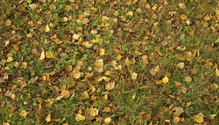 Autumn leaves fall onto the grass.
