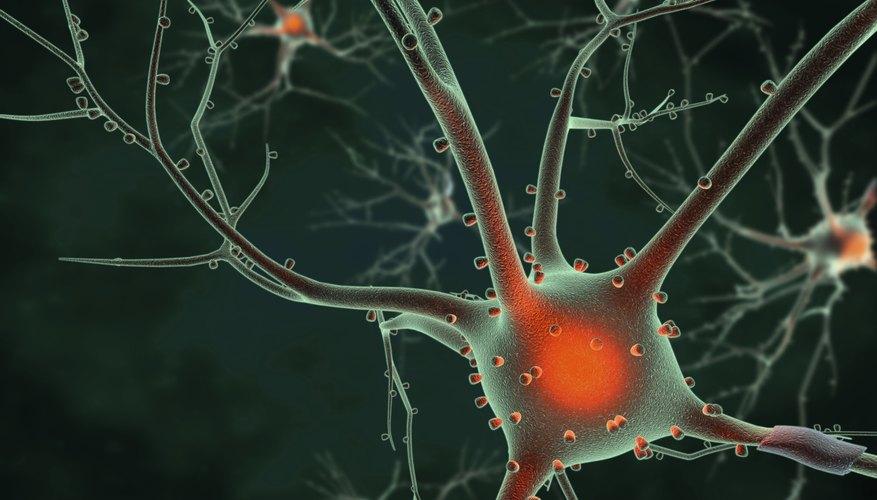 3D neuron rendering.