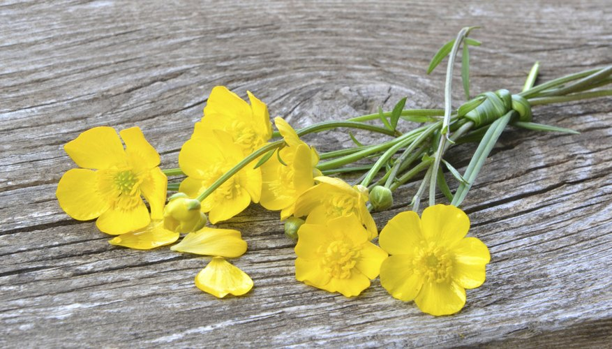 A bunch of yellow flowers on wood.