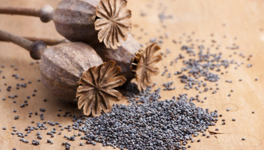 How to get high poppy seeds