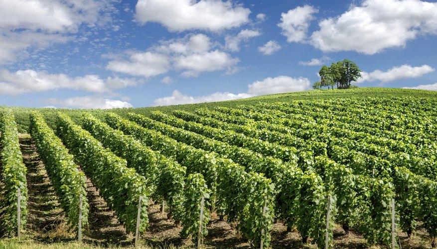 us wine industry swot analysis