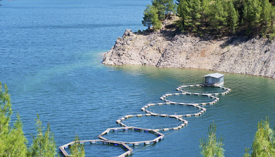 How to start a fish farm bizfluent for How to start fish farming