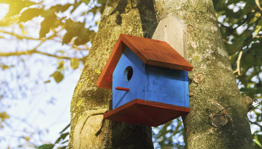 The Backyard Naturalist: Eastern Bluebird Nesting Boxes- ¡Poner ahora!