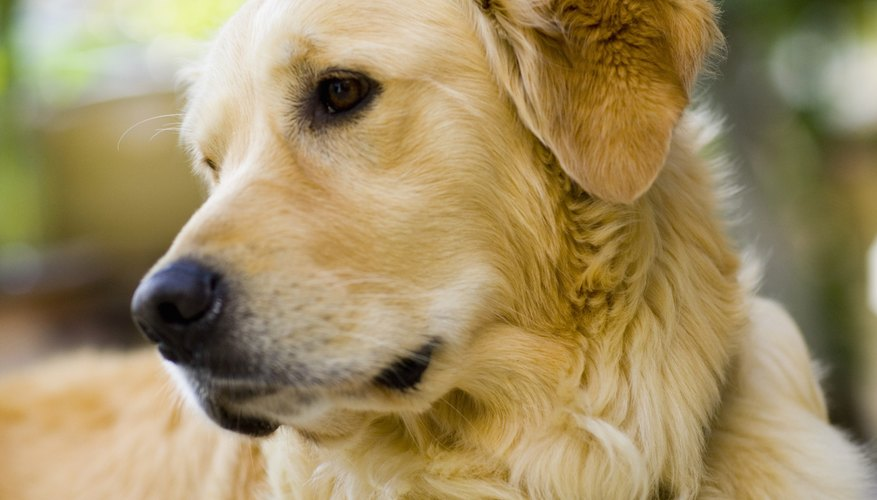 Un corral para perros le brinda un lugar para jugar afuera.