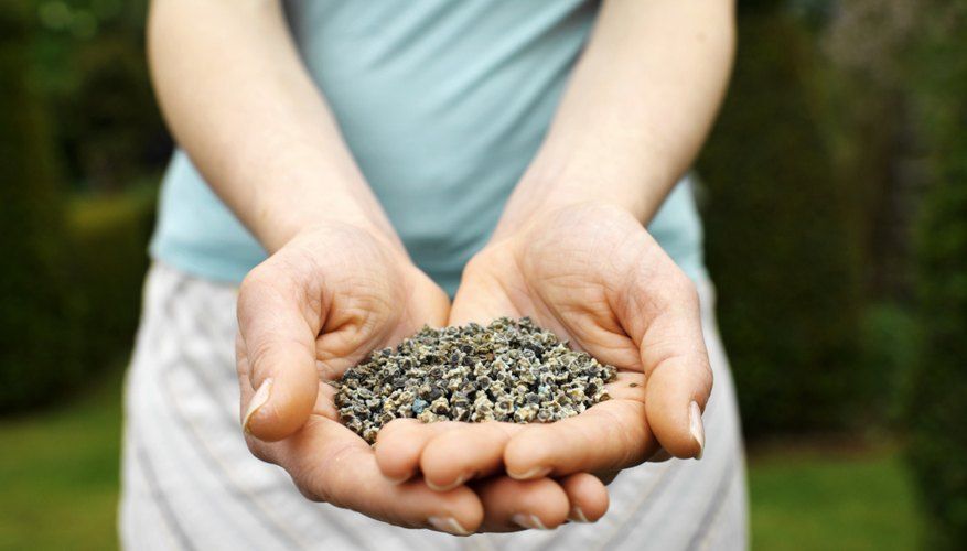 Close-up of woman holding handful of seeds.