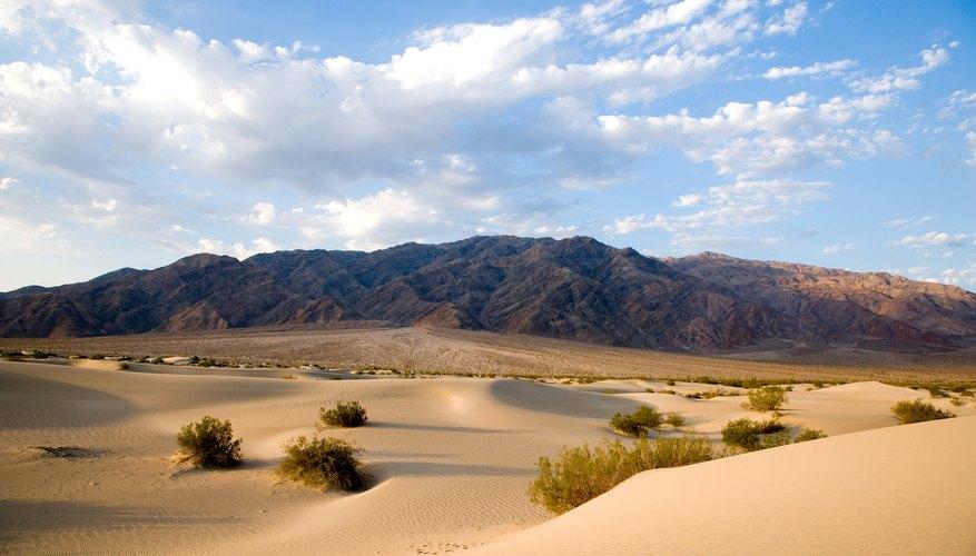 Desert Diorama Ideas | Our Pastimes
