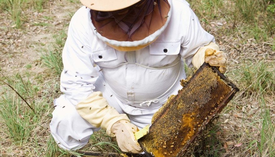 You can make money beekeeping in more ways than just selling excess honey.