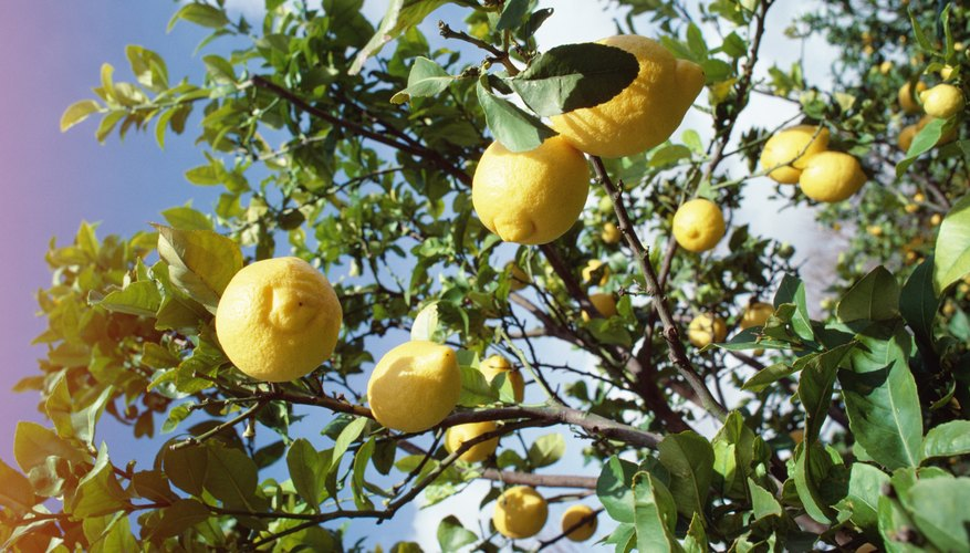 Lemons can be more beneficial for detoxing your body.