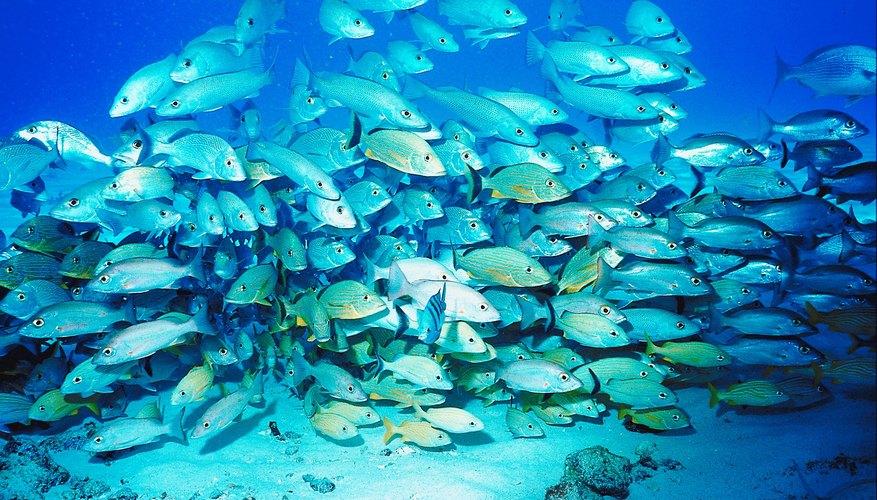 Cozumel es una preciosa isla en el Caribe Mexicano famosa por tener el segundo arrecife de coral más grande del mundo. Aprovecha tu visita y conoce Cozumel bajo el agua.