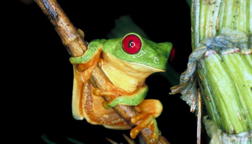 Los científicos investigan la relación entre las ranas e insectos.
