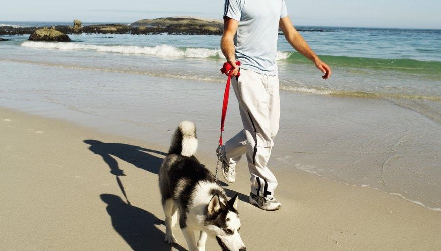 A man walks his dog on the beach.