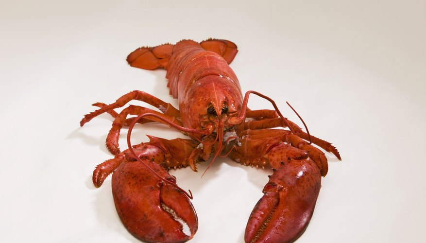 Uncooked lobster