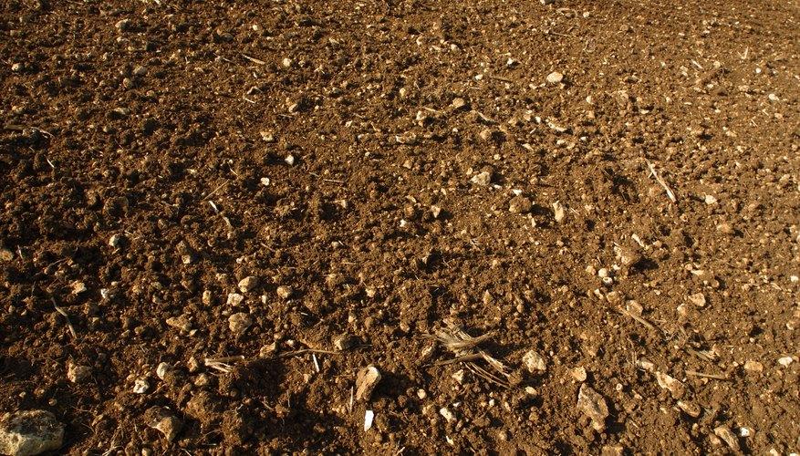 El suelo puede encontrarse en tu producto de belleza favorito.