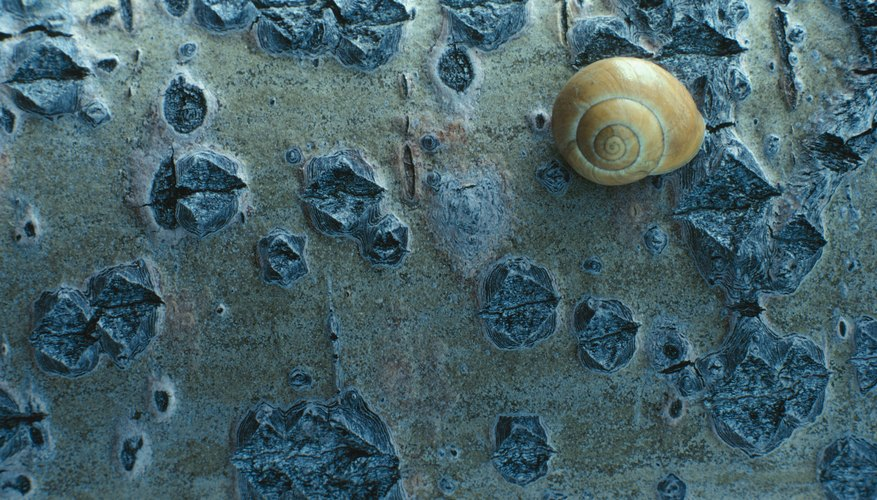 Snails are usually active at night.