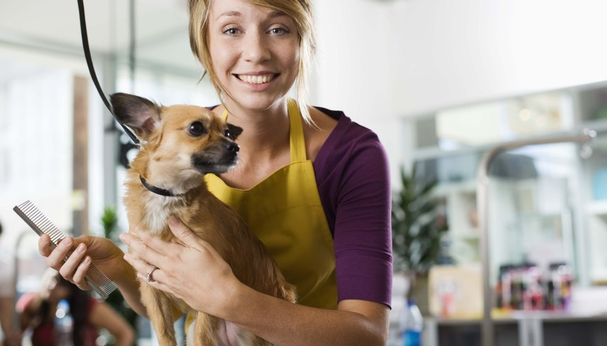 Pet groomers may advance to management roles with experience.