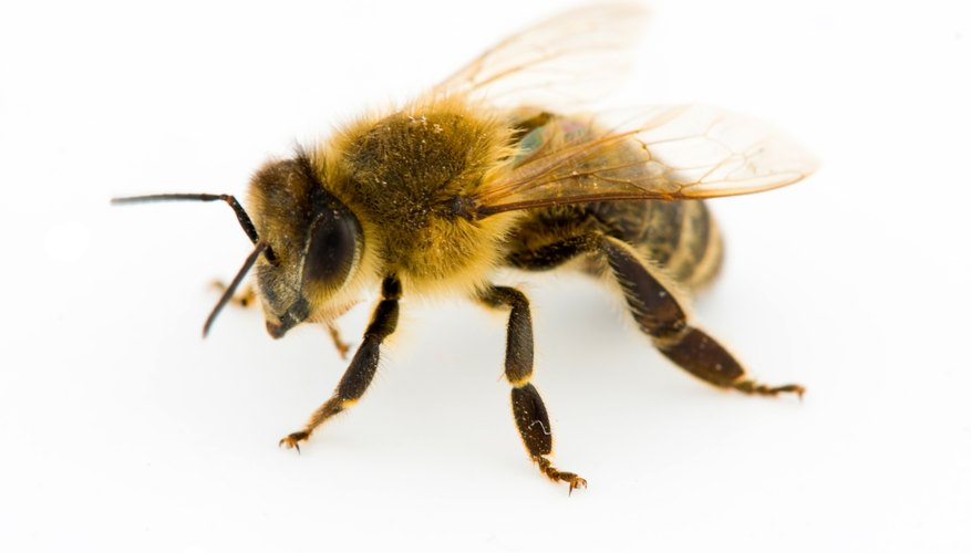 What Happens To Bees Wasps At Night Sciencing