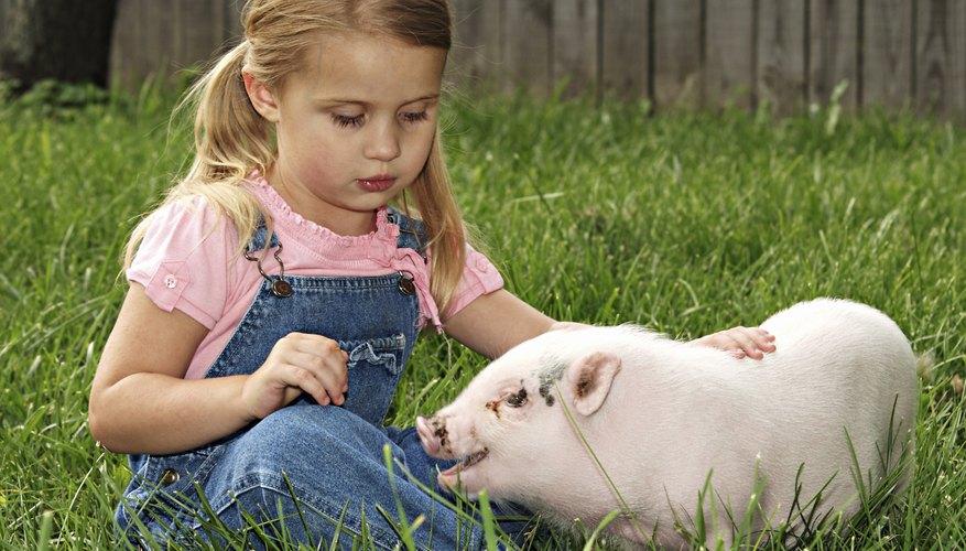 Una niña sentada en el césped con su cerdo.