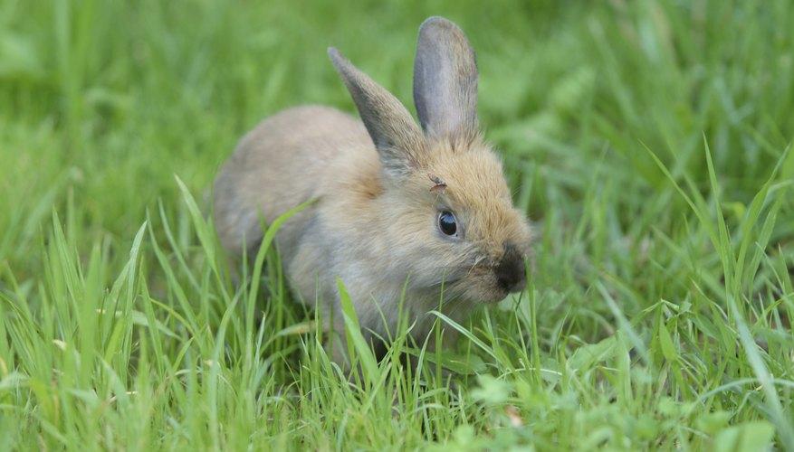 Tu conejo dará la bienvenida a la oportunidad de pastar.