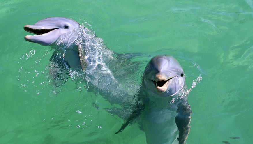 Swimming With Dolphins Near Texas