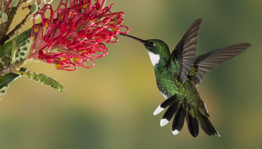Image result for image of a hummingbird