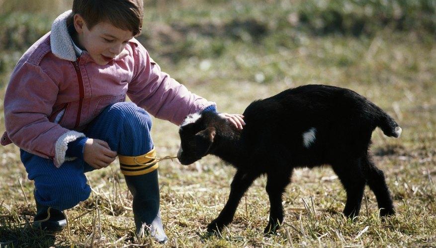 Los niños en Saline pueden participar en distintas actividades, desde granjas hasta clases.