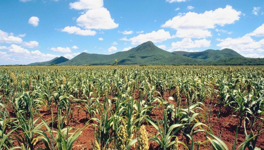 La agricultura es una de las actividades más importante y fundamentales que llevaron a cabo nuestros antepasados.