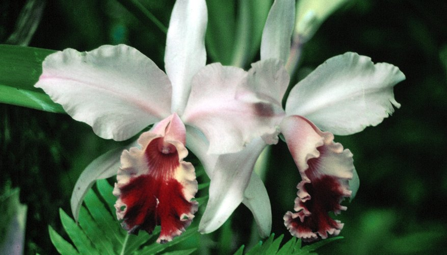 Orchids have ornately styled flowers.