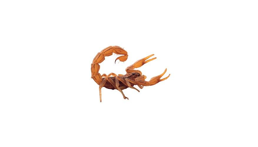 El alambre de cobre imita el color del escorpión de Arizona.
