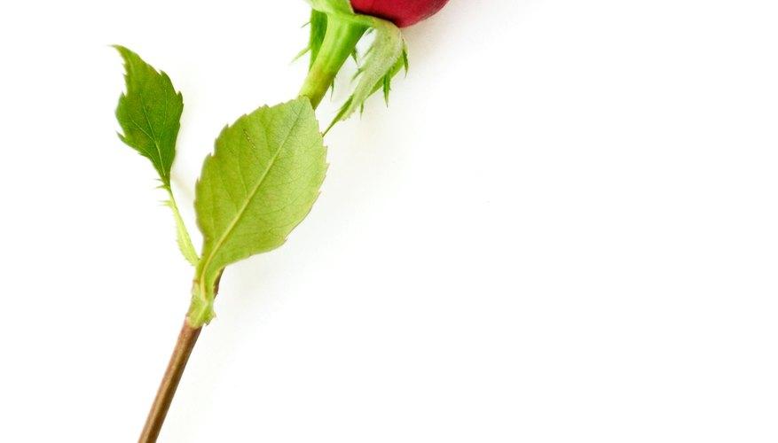 Las rosas de ropa interior se parecen sorprendentemente a las reales.