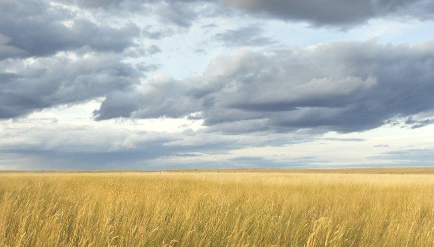 La refracción y la absorción de la luz hace que las nubes se vuelvan de un color oscuro y gris.