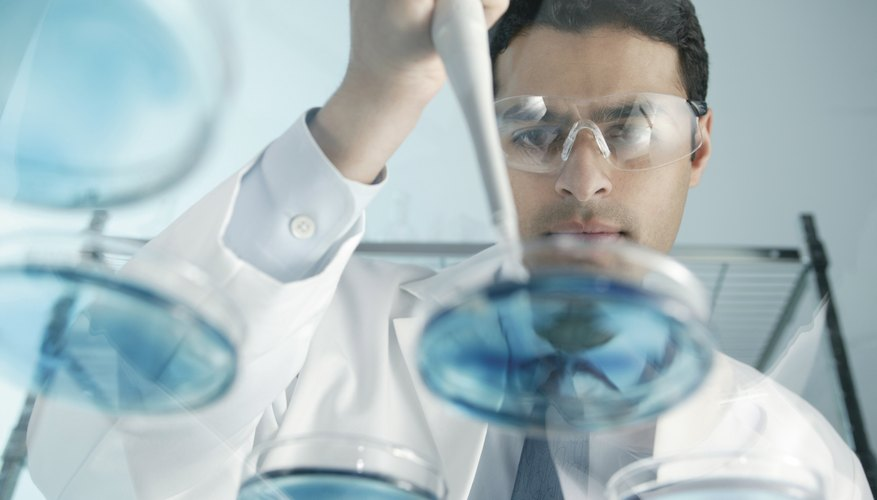 Las placas de cultivo deben estar preparadas adecuadamente para garantizar que las bacterias crezcan.