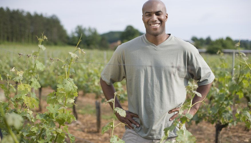 African man standing in vineyard