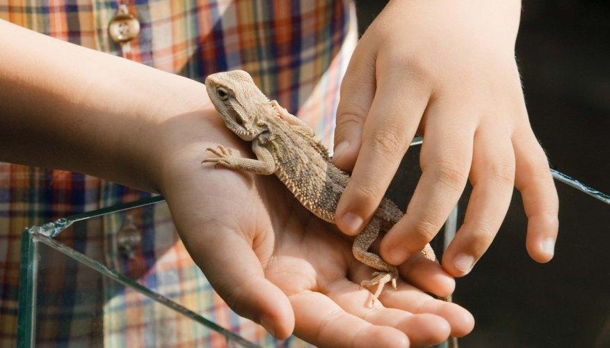 Fomenta el amor de tu hijo por los animales con las actividades de zoología.