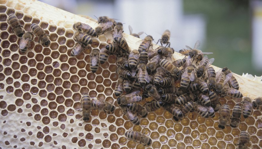 order your honey bees