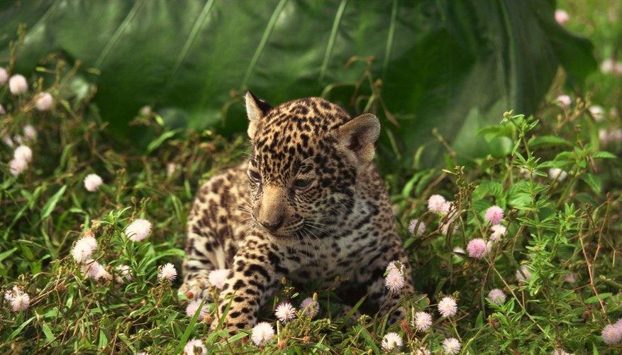 La mitad de la población animal del mundo puede ser encontrada en las selvas.