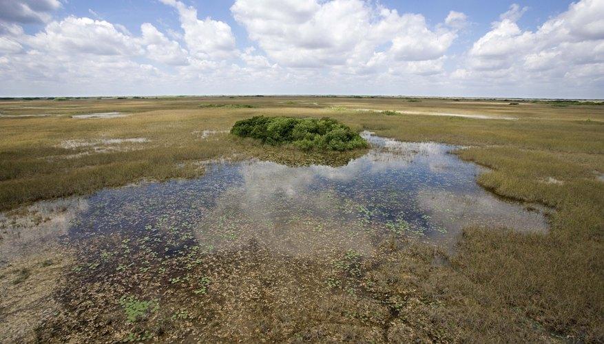 Flooded landscape.