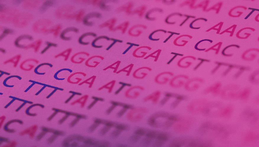 The majority of the genes in the human genome have only one allele, or version of the gene.