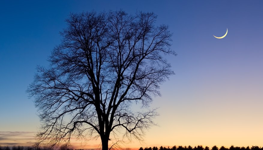 A crescent moon in the night sky above the silhouette of a tree.