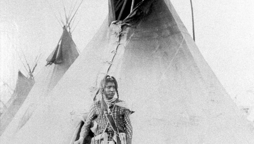 American Indians used pine trees to make teepee supports.