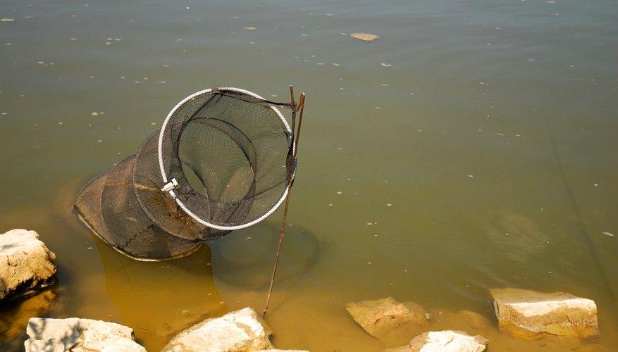 Tips on Fishing Hoop Nets