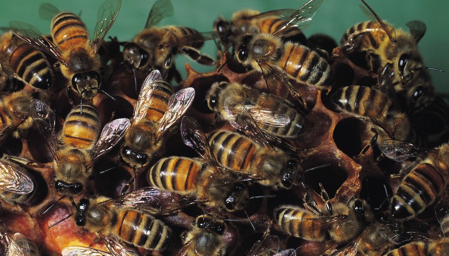 How to Kill Bees Coming Out of the Ground | Garden Guides