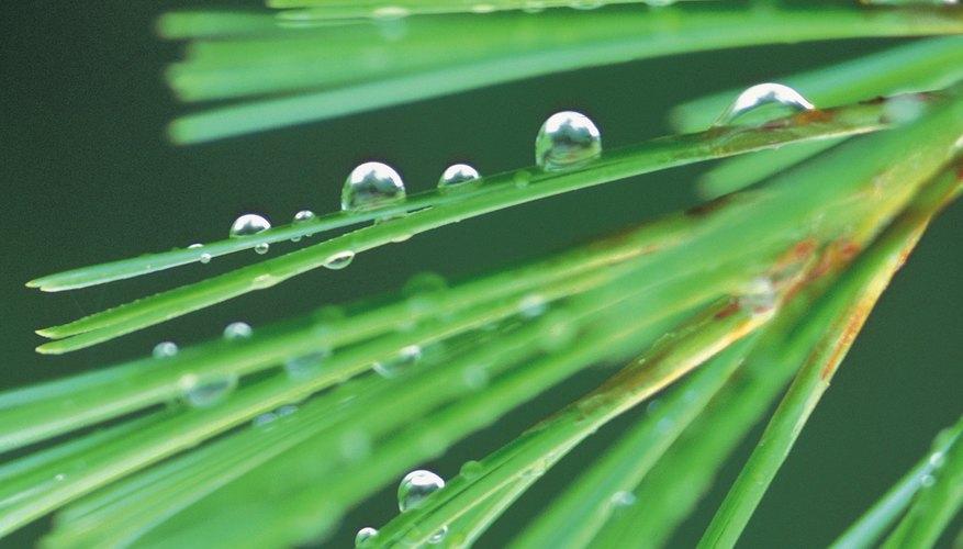 Gotas de rocío adquieren una forma esférica por la tensión superficial.