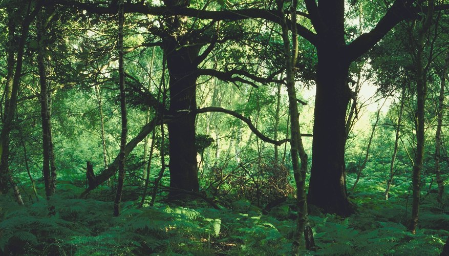 Biotic and abiotic forces both affect the health of a forest.