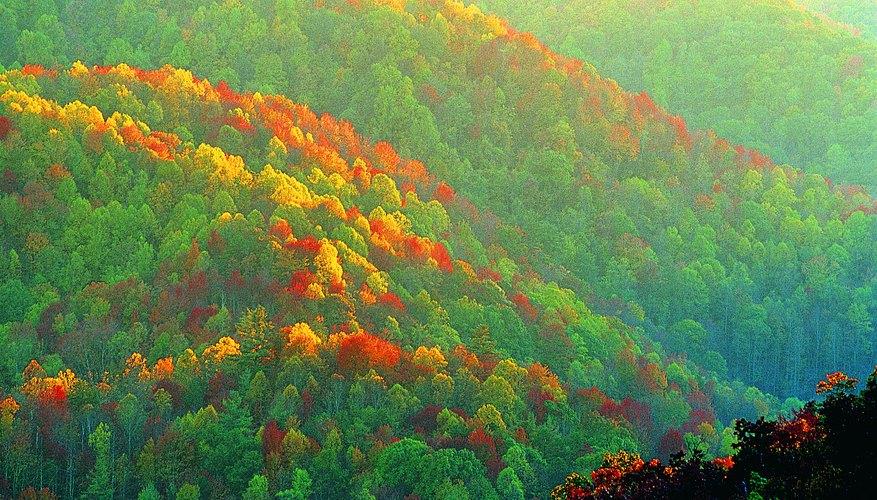 Montañas Great Smoky