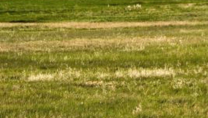 Prairies represent one type of terrestrial ecosystem.