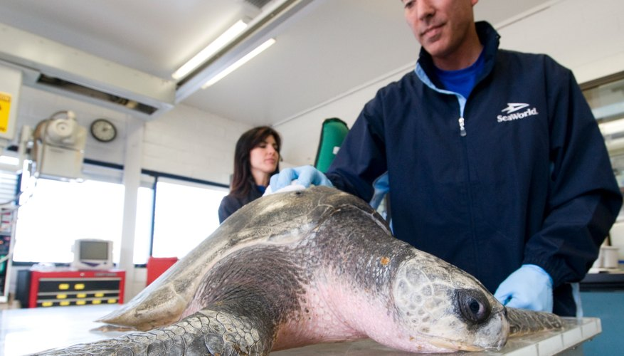 Veterinarians in zoos and aquariums learn to help many different kinds of animals.