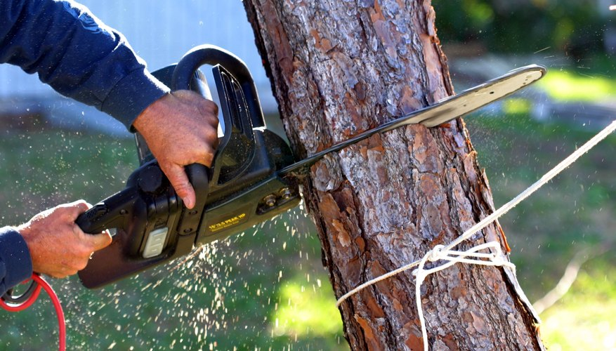 4 Things to Look for In Your Tree Removal Estimate