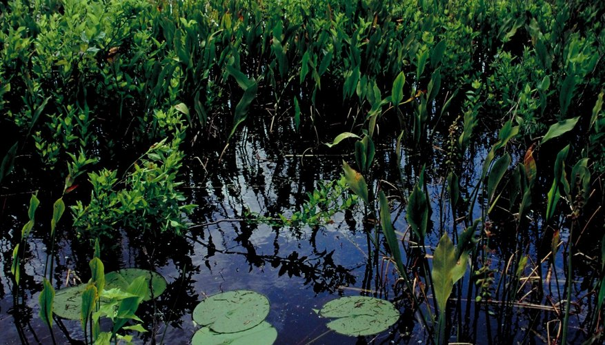 Marshes, Bogs and Swamps