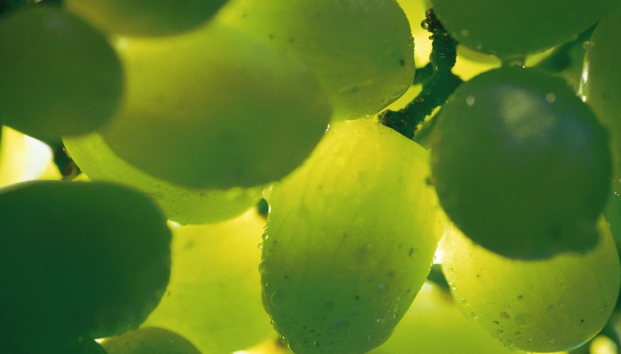 You can grow your own grapes hydroponically.