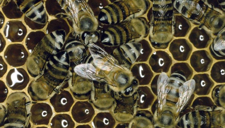 La gente ha utilizado cera de abeja derretida durante miles de años para una variedad de usos.
